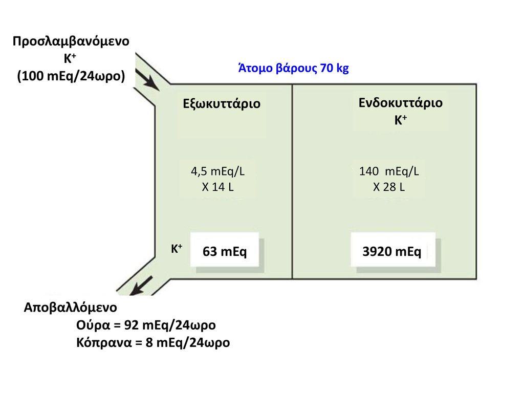 Προσλαμβανόμενο Κ+ (100 mEq/24ωρο) Εξωκυττάριο Ενδοκυττάριο Κ+ 63 mEq