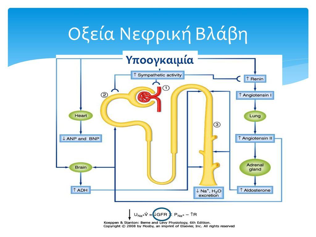 Οξεία Νεφρική Βλάβη Υποογκαιμία