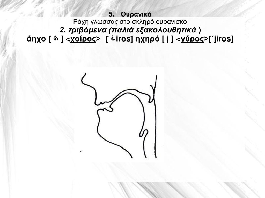 5. Ουρανικά Ράχη γλώσσας στο σκληρό ουρανίσκο 2