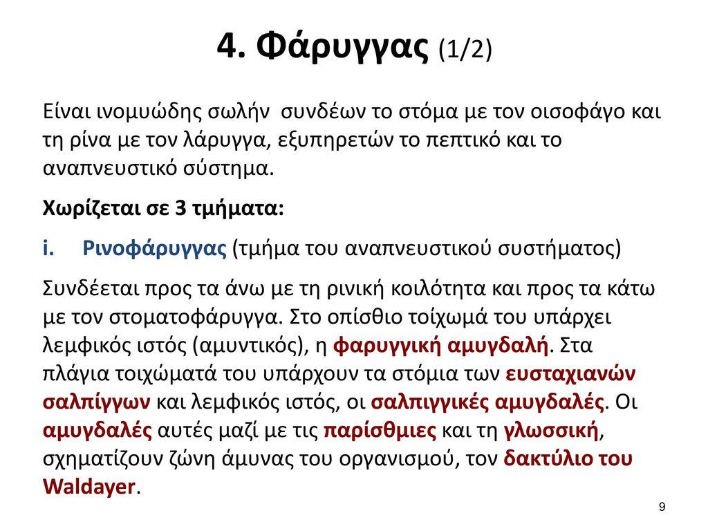 4. Φάρυγγας (2/2)