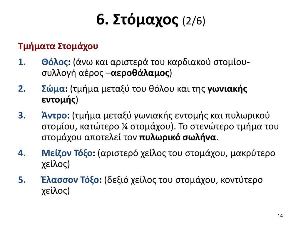 6. Στόμαχος (3/6) Στήριξη Στομάχου