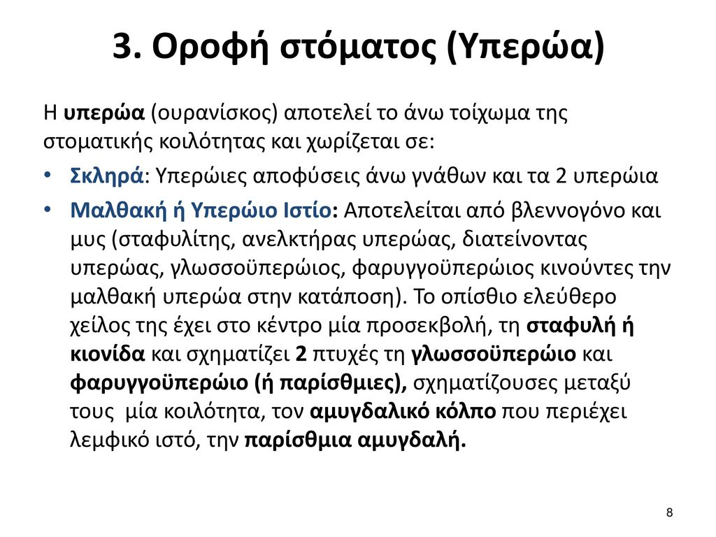 4. Φάρυγγας (1/2)