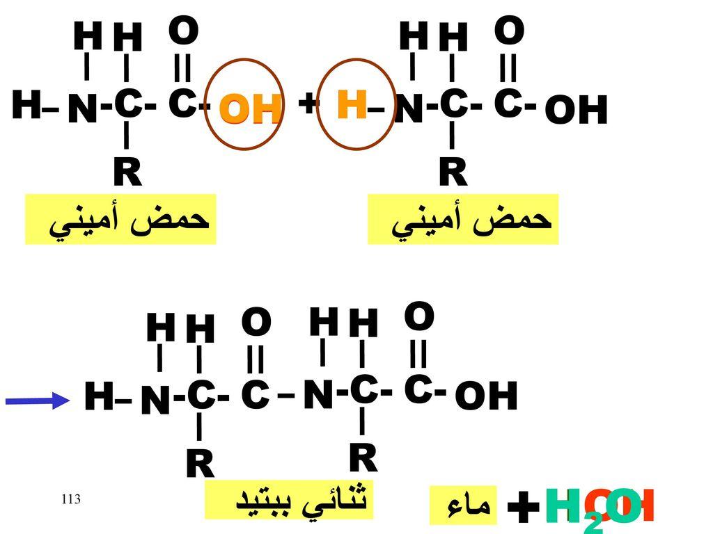 + H2O H OH O O H H H H H -C- C- + -C- C- N OH OH H H N OH R R