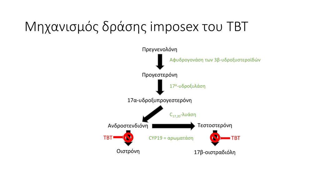 Μηχανισμός δράσης imposex του TBT