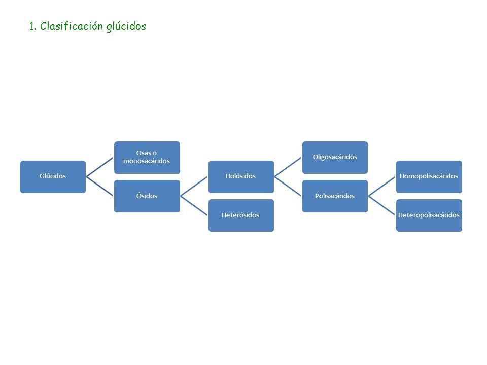 1. Clasificación glúcidos