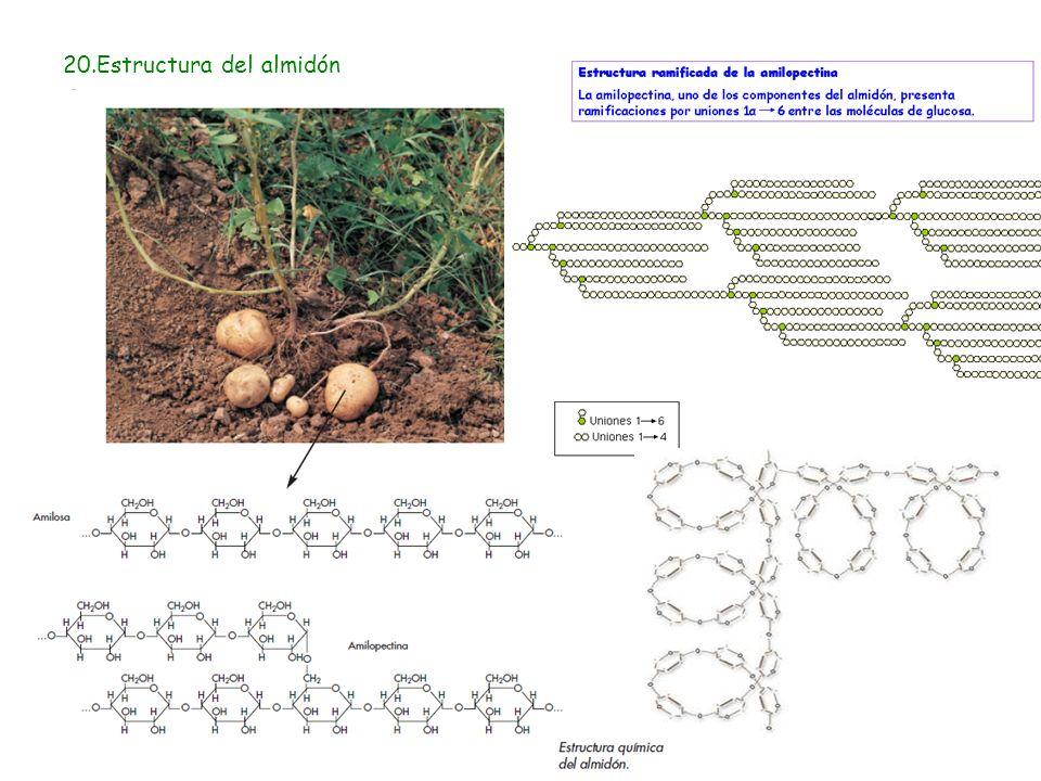 20.Estructura del almidón