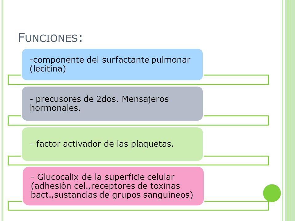 Funciones: -componente del surfactante pulmonar (lecitina) - precusores de 2dos. Mensajeros hormonales.