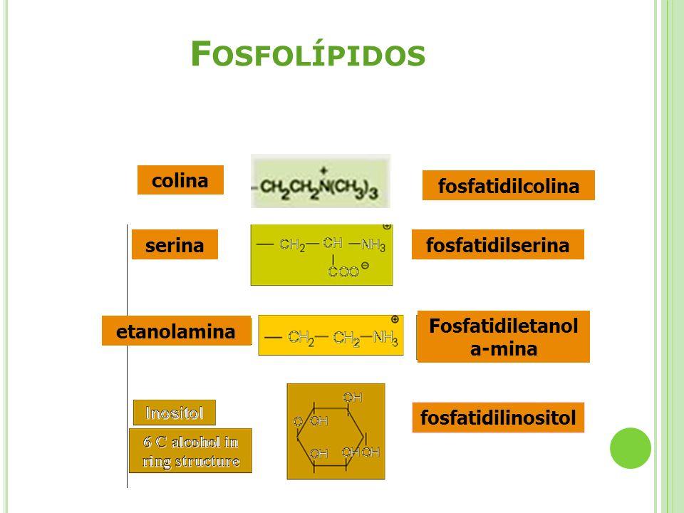 Fosfatidiletanola-mina