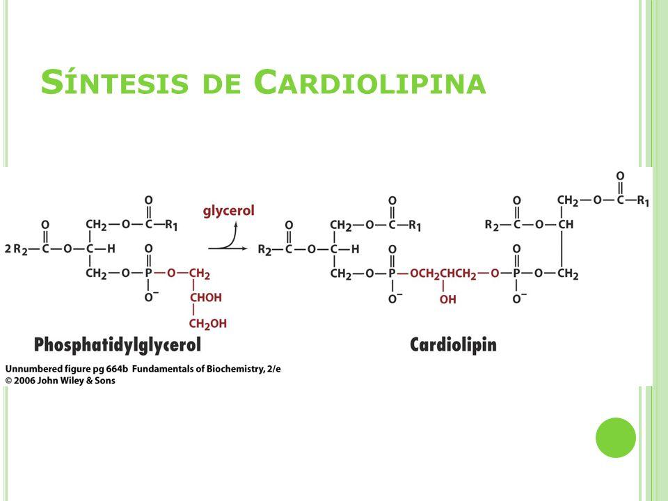 Síntesis de Cardiolipina
