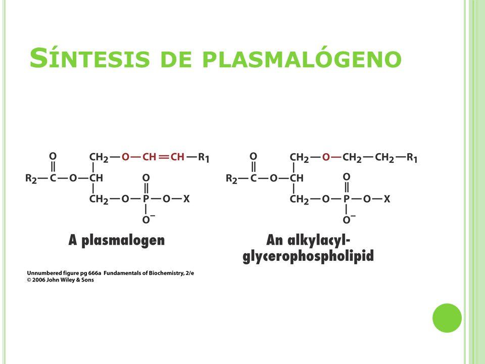 Síntesis de plasmalógeno