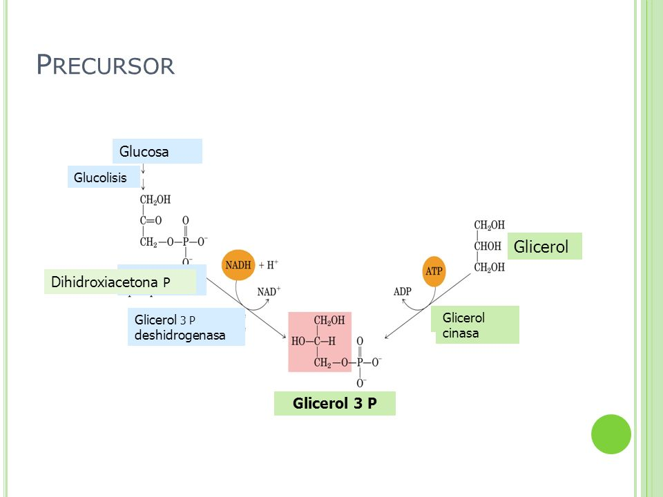 Precursor Glicerol Glucosa Dihidroxiacetona P Glicerol 3 P Glucolisis