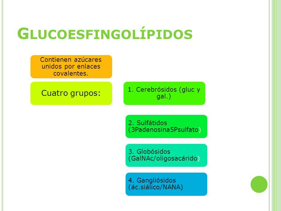 Glucoesfingolípidos Cuatro grupos: