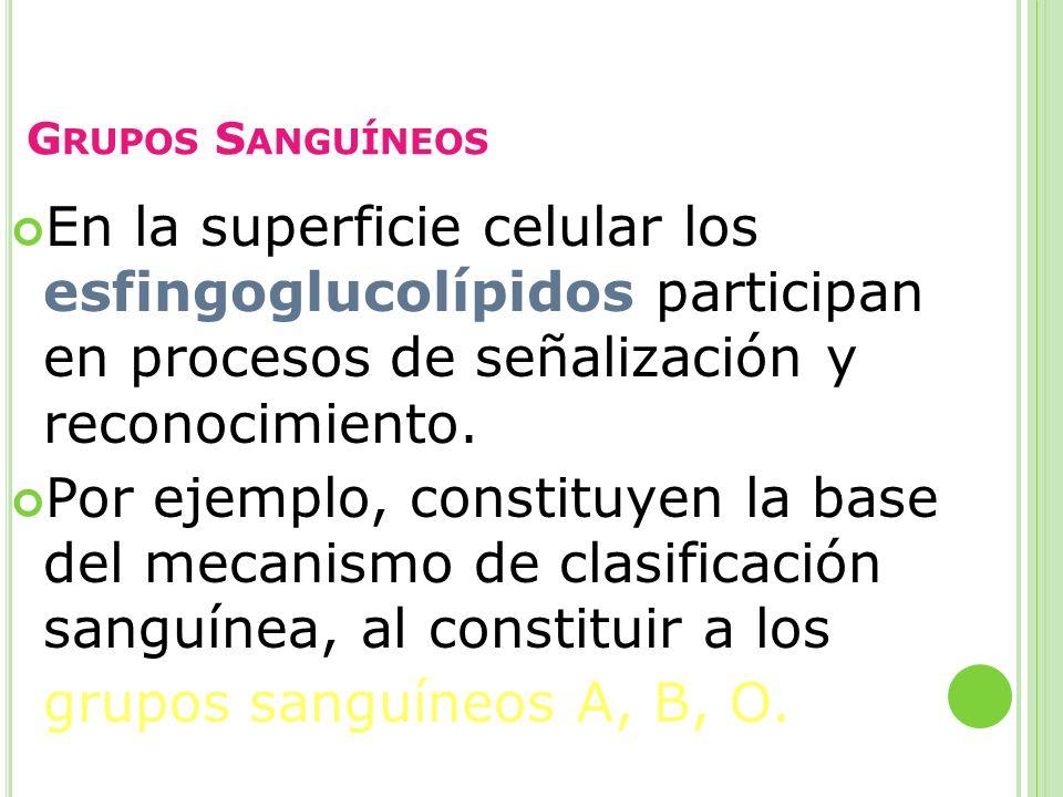 Grupos Sanguíneos En la superficie celular los esfingoglucolípidos participan en procesos de señalización y reconocimiento.
