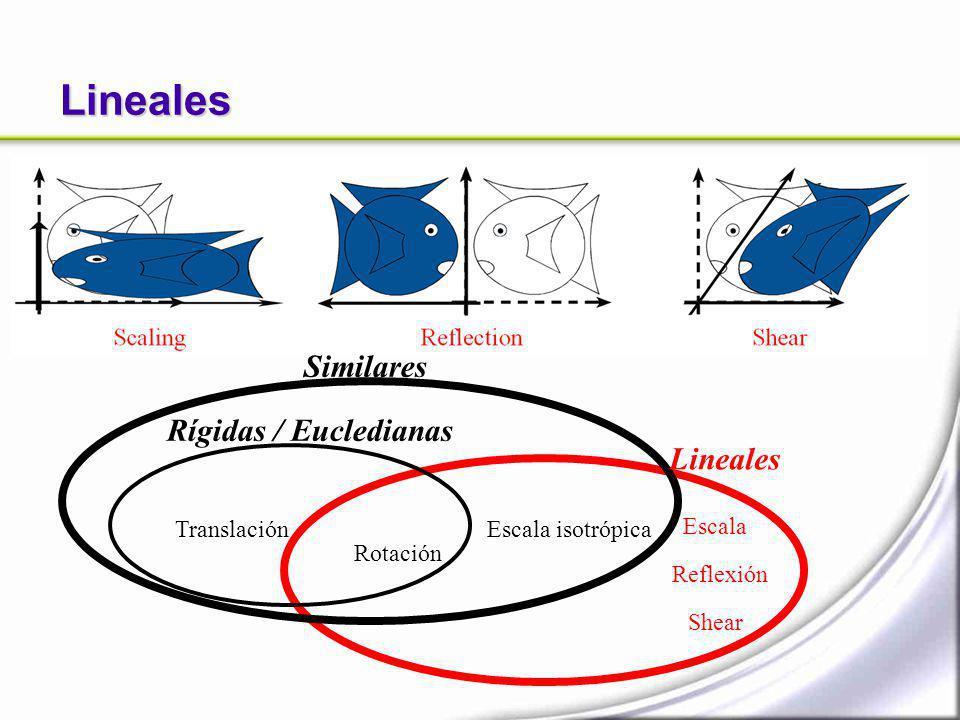 Lineales Similares Rígidas / Eucledianas Lineales Translación