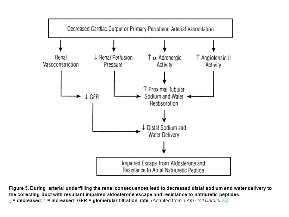 Figure 5. During arterial underfilling the renal consequences lead to decreased distal sodium and water delivery to the collecting duct with resultant impaired aldosterone escape and resistance to natriuretic peptides.