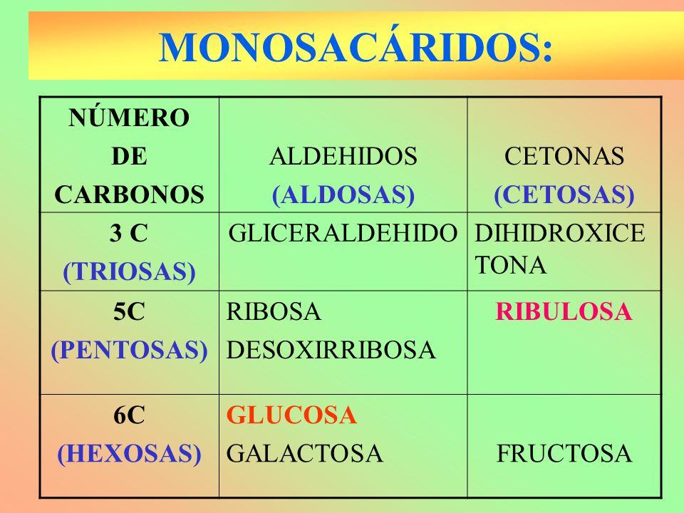 MONOSACÁRIDOS: NÚMERO DE CARBONOS ALDEHIDOS (ALDOSAS) CETONAS