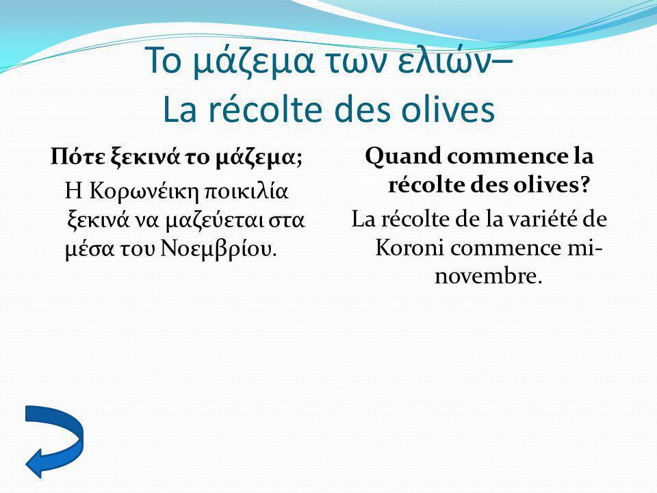 Το μάζεμα των ελιών– La récolte des olives
