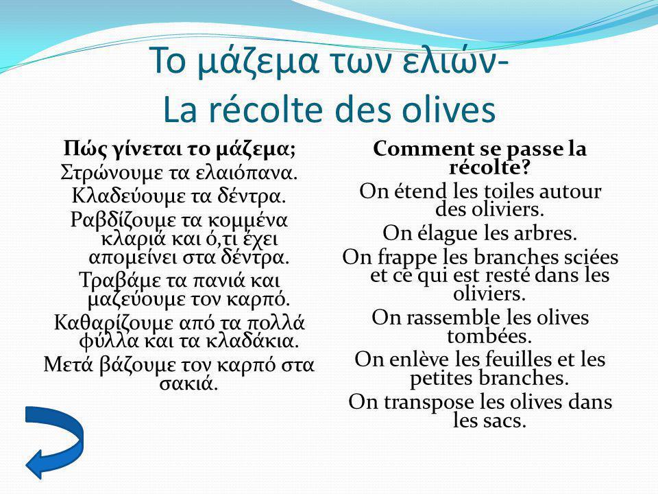 Το μάζεμα των ελιών- La récolte des olives