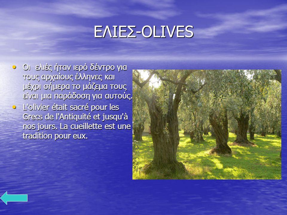 ΕΛΙΕΣ-OLIVES Οι ελιές ήταν ιερό δέντρο για τους αρχαίους έλληνες και μέχρι σήμερα το μάζεμα τους είναι μια παράδοση για αυτούς.