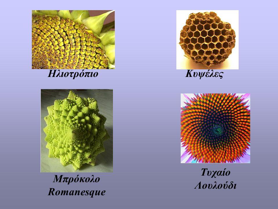 Ηλιοτρόπιο Κυψέλες Τυχαίο Λουλούδι Μπρόκολο Romanesque