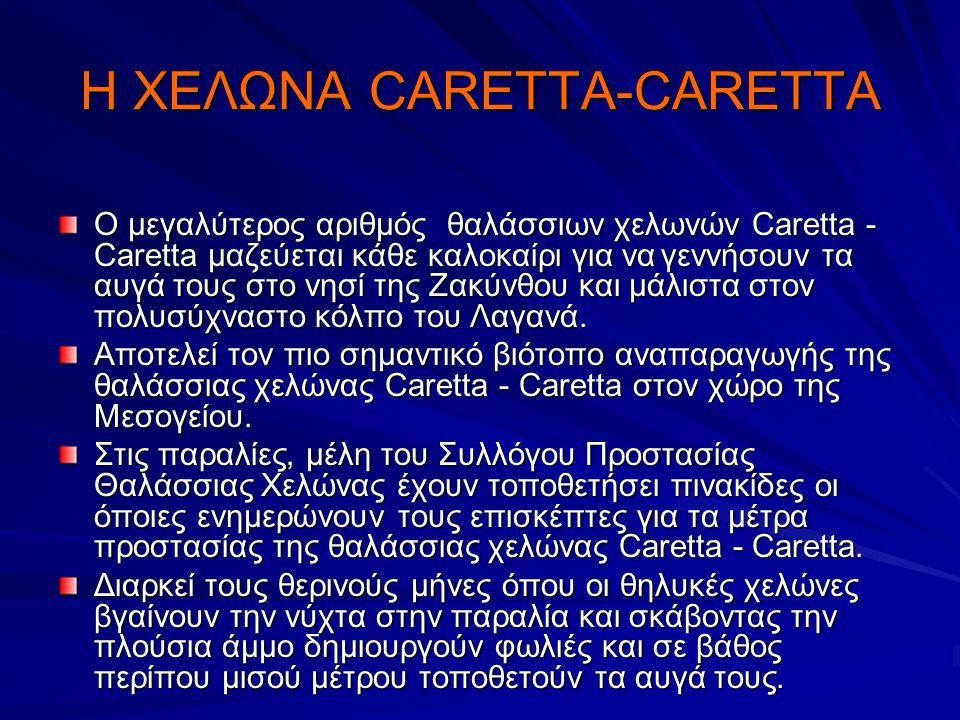 Η ΧΕΛΩΝΑ CARETTA-CARETTA