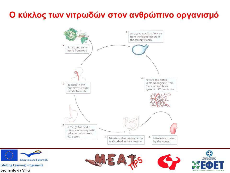 Ο κύκλος των νιτρωδών στον ανθρώπινο οργανισμό