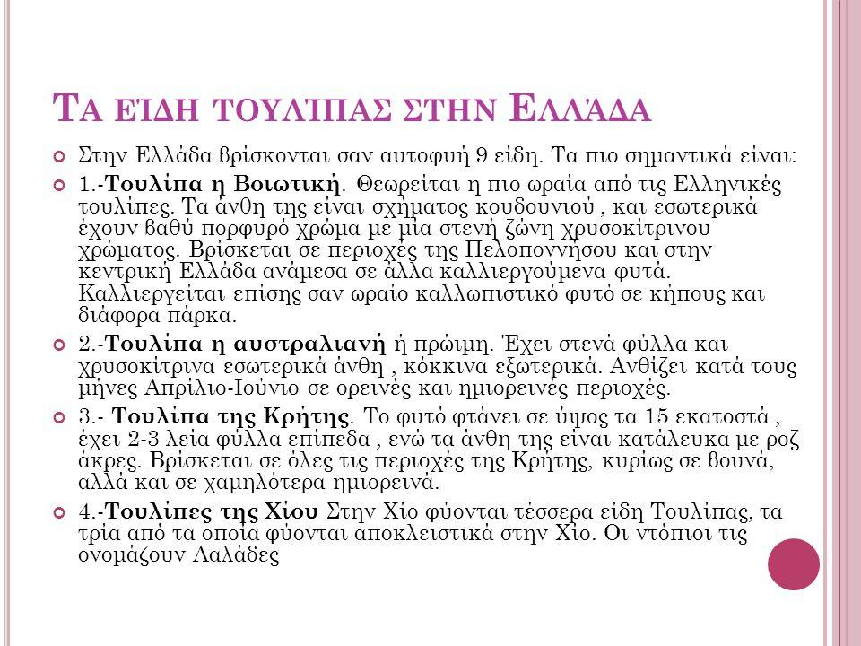 Τα είδη τουλίπας στην Ελλάδα