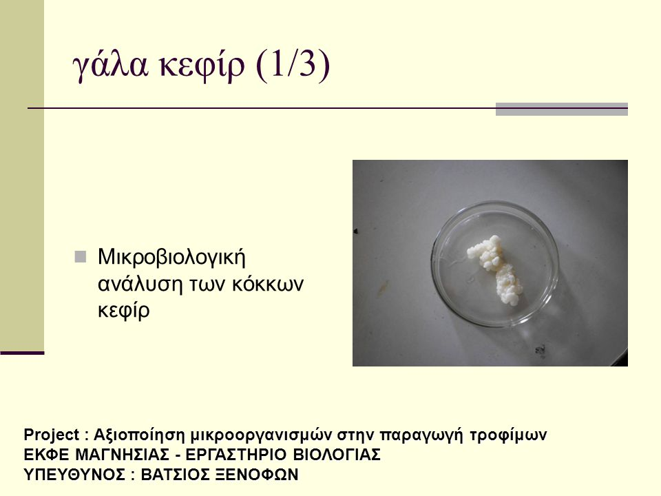 γάλα κεφίρ (1/3) Μικροβιολογική ανάλυση των κόκκων κεφίρ