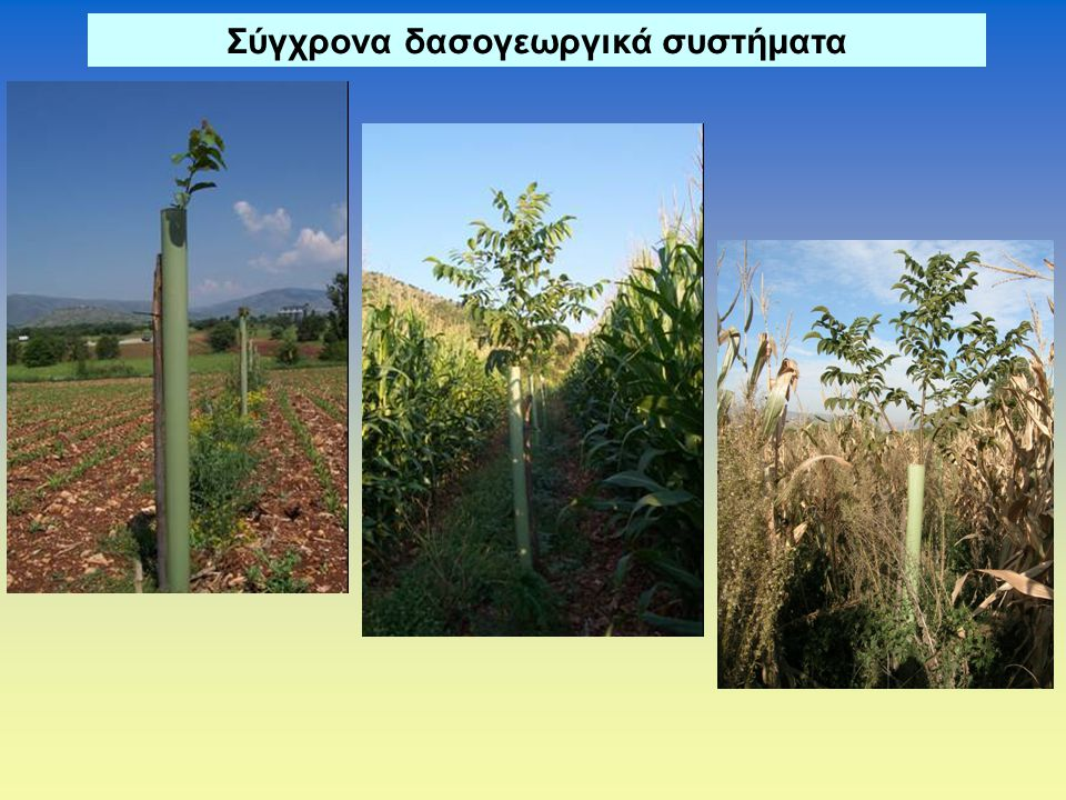 Σύγχρονα δασογεωργικά συστήματα