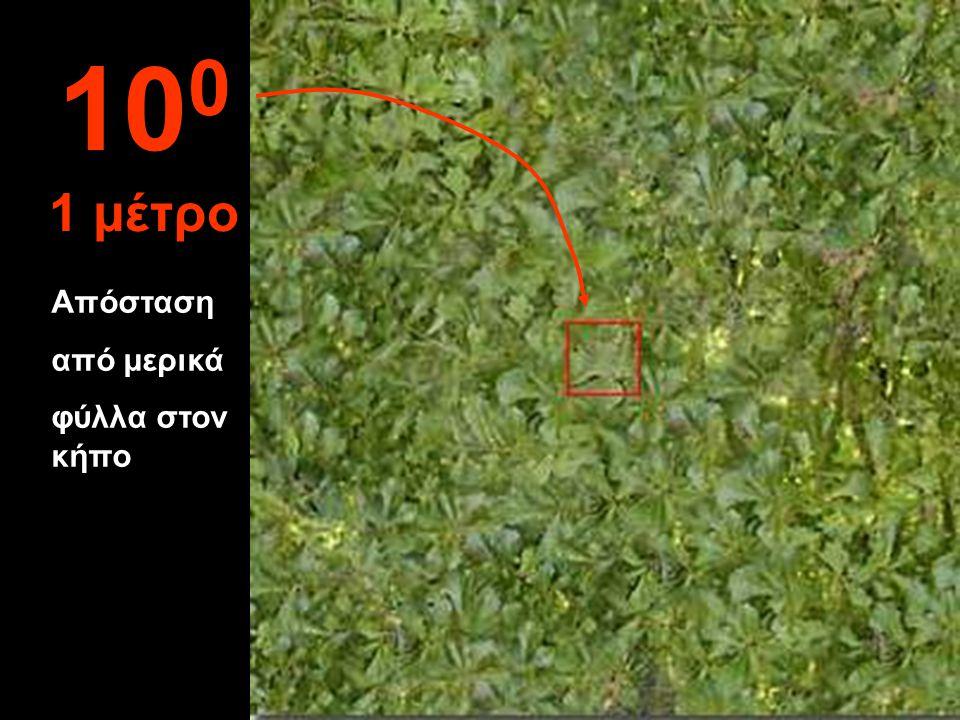 100 1 μέτρο Απόσταση από μερικά φύλλα στον κήπο
