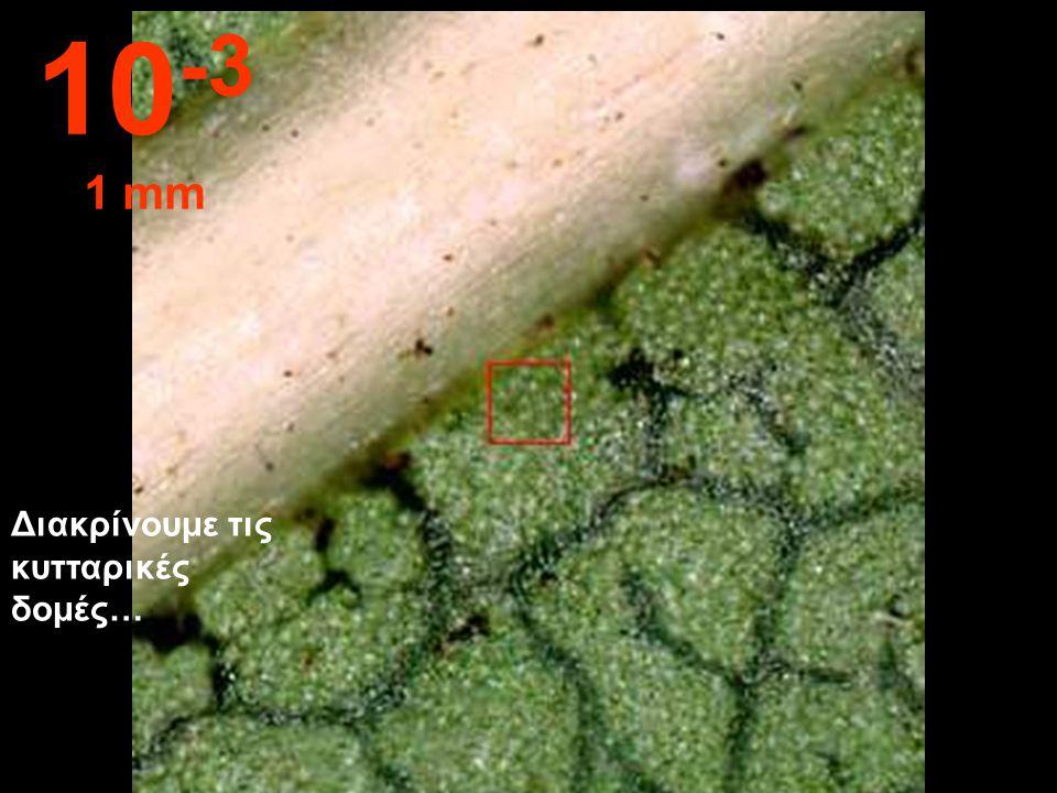 10-3 1 mm Διακρίνουμε τις κυτταρικές δομές…