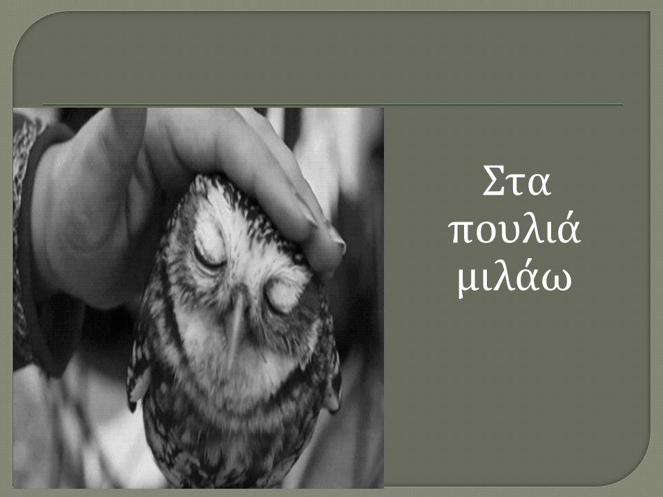 Στα πουλιά μιλάω