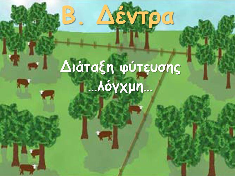 Β. Δέντρα Διάταξη φύτευσης …λόγχμη…