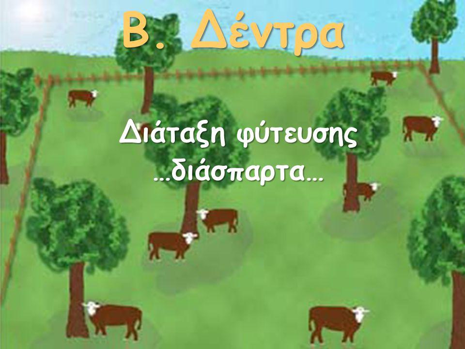 Β. Δέντρα Διάταξη φύτευσης …διάσπαρτα…