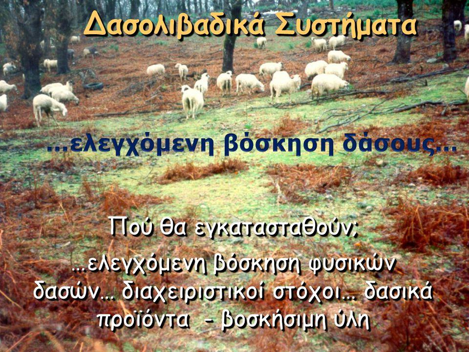 Δασολιβαδικά Συστήματα …ελεγχόμενη βόσκηση δάσους…