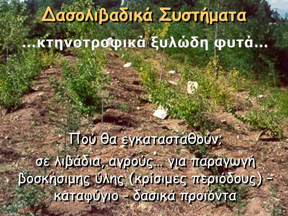 Δασολιβαδικά Συστήματα …κτηνοτροφικά ξυλώδη φυτά…