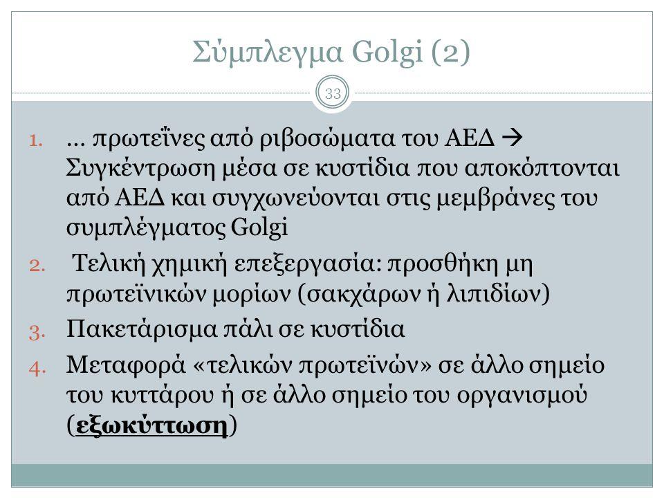 Σύμπλεγμα Golgi (2)