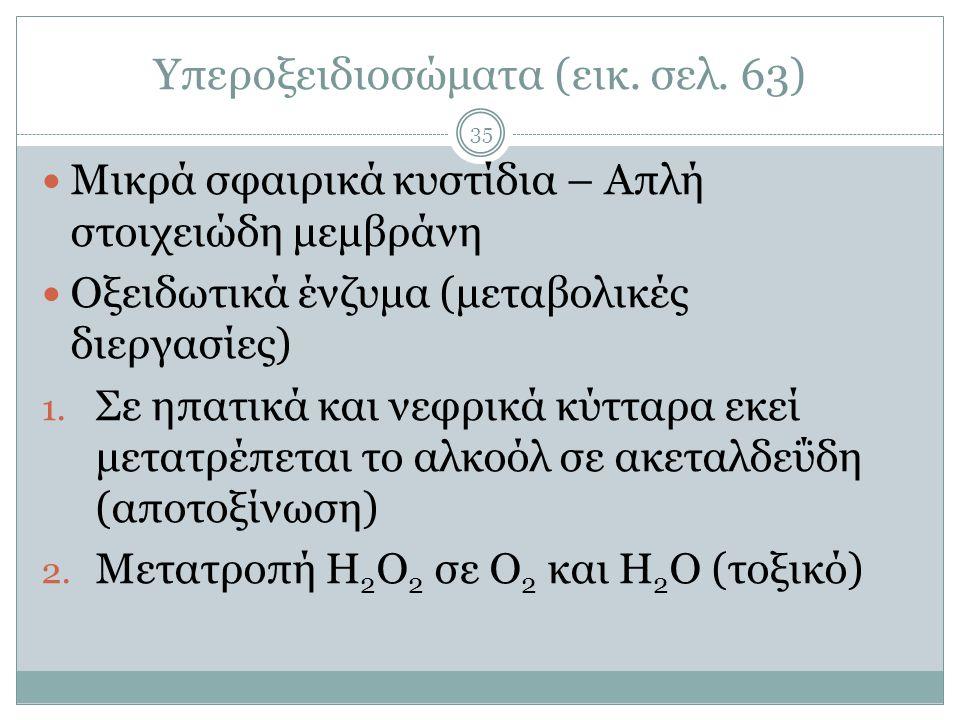 Υπεροξειδιοσώματα (εικ. σελ. 63)