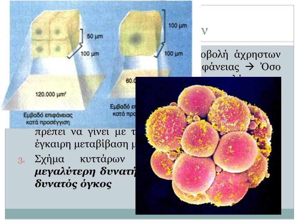 Μέγεθος κυττάρων