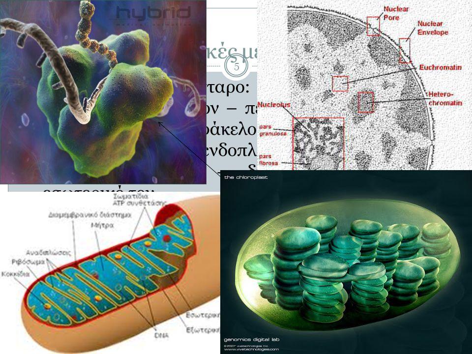 Κυτταρικές μεμβράνες