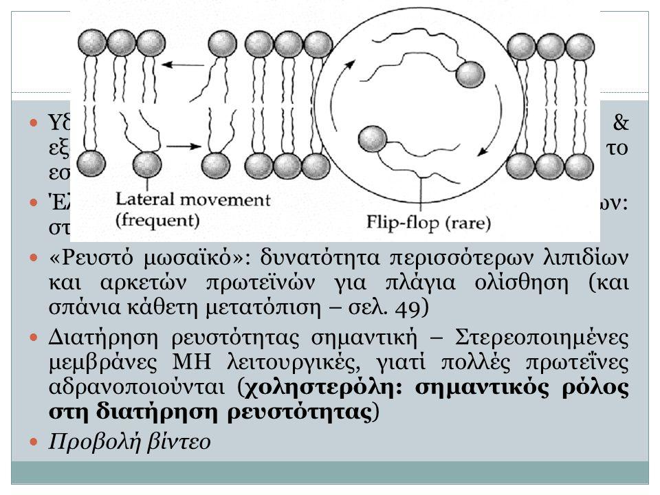 Δομή πλασματικής μεμβράνης (2)