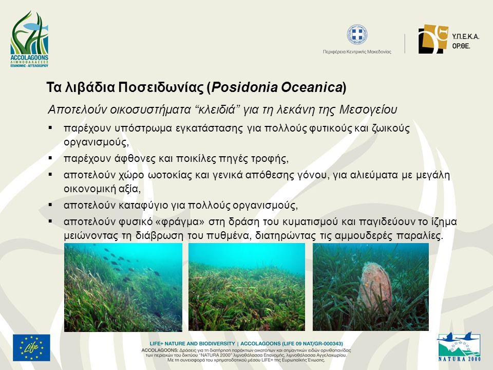 Τα λιβάδια Ποσειδωνίας (Posidonia Oceanica)