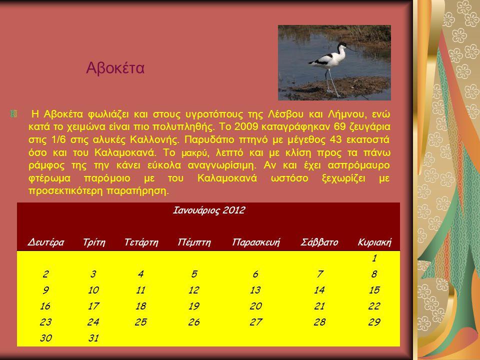Αβοκέτα
