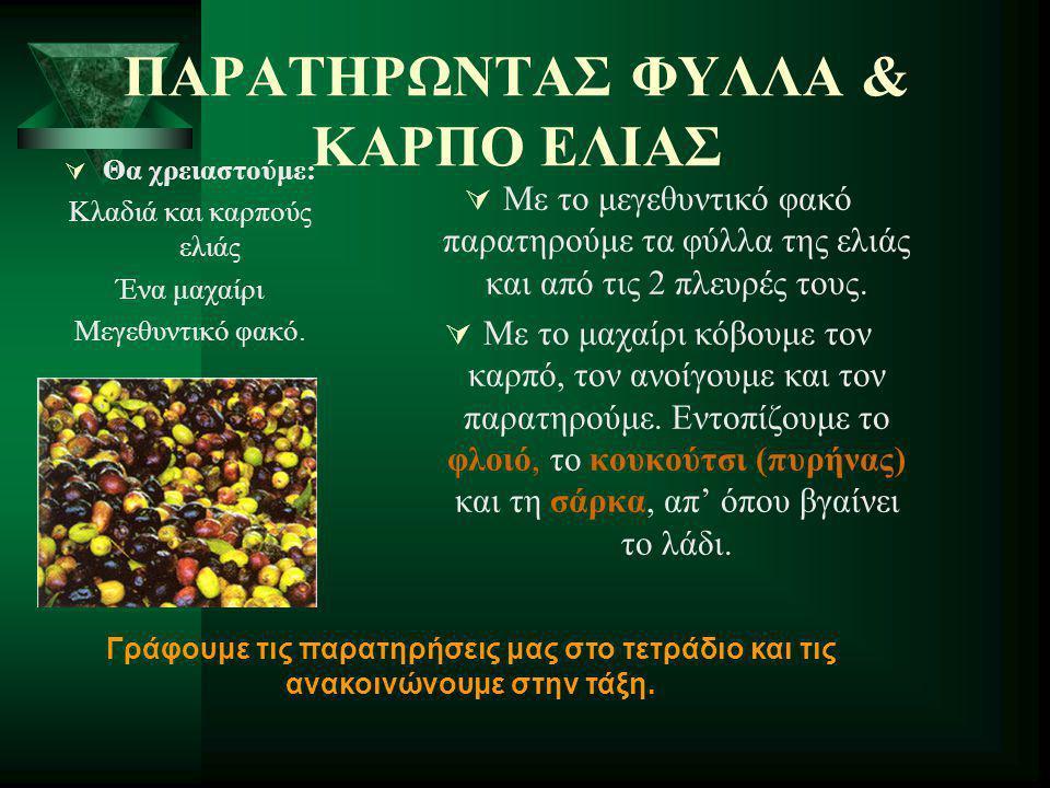 ΠΑΡΑΤΗΡΩΝΤΑΣ ΦΥΛΛΑ & ΚΑΡΠΟ ΕΛΙΑΣ
