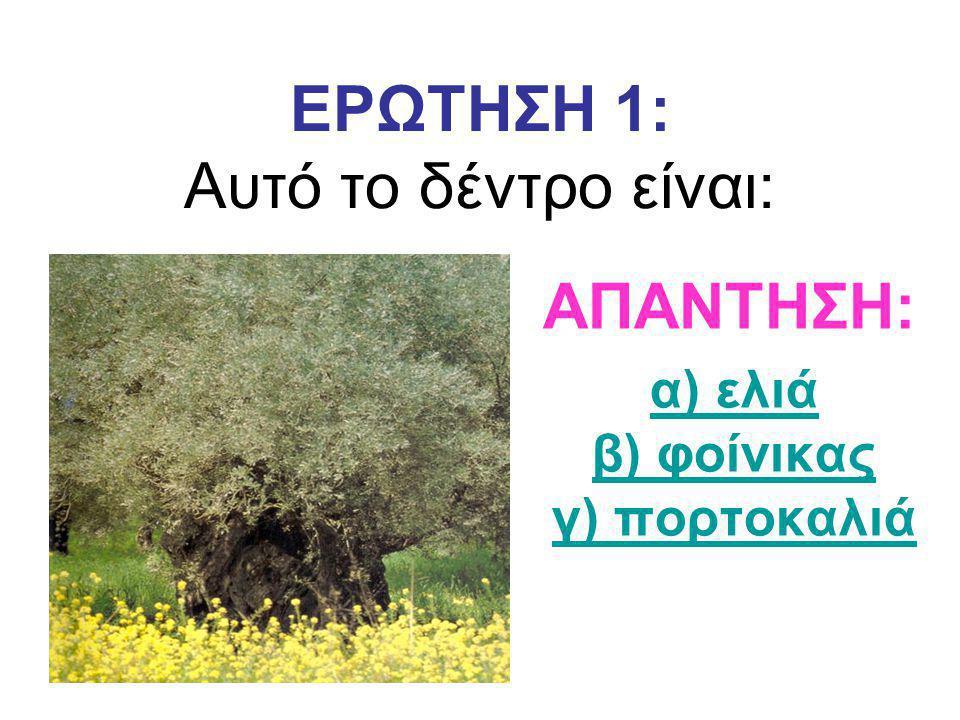 ΕΡΩΤΗΣΗ 1: Αυτό το δέντρο είναι: