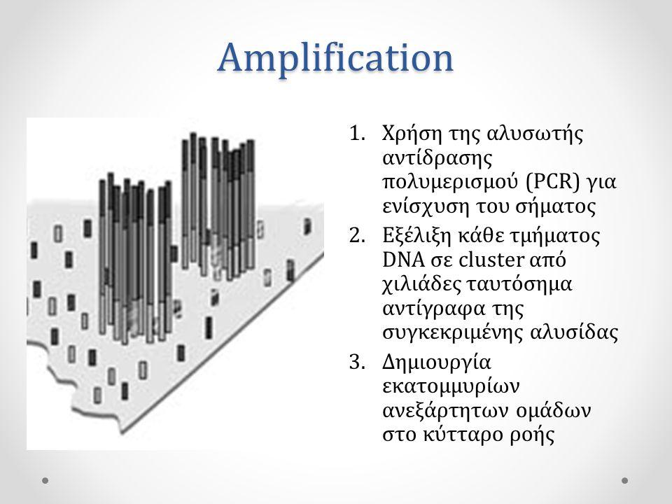 Amplification Χρήση της αλυσωτής αντίδρασης πολυμερισμού (PCR) για ενίσχυση του σήματος.