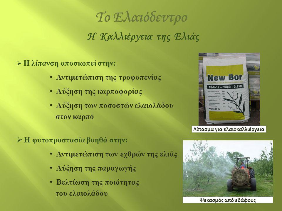 H Καλλιέργεια της Ελιάς Λίπασμα για ελαιοκαλλιέργεια