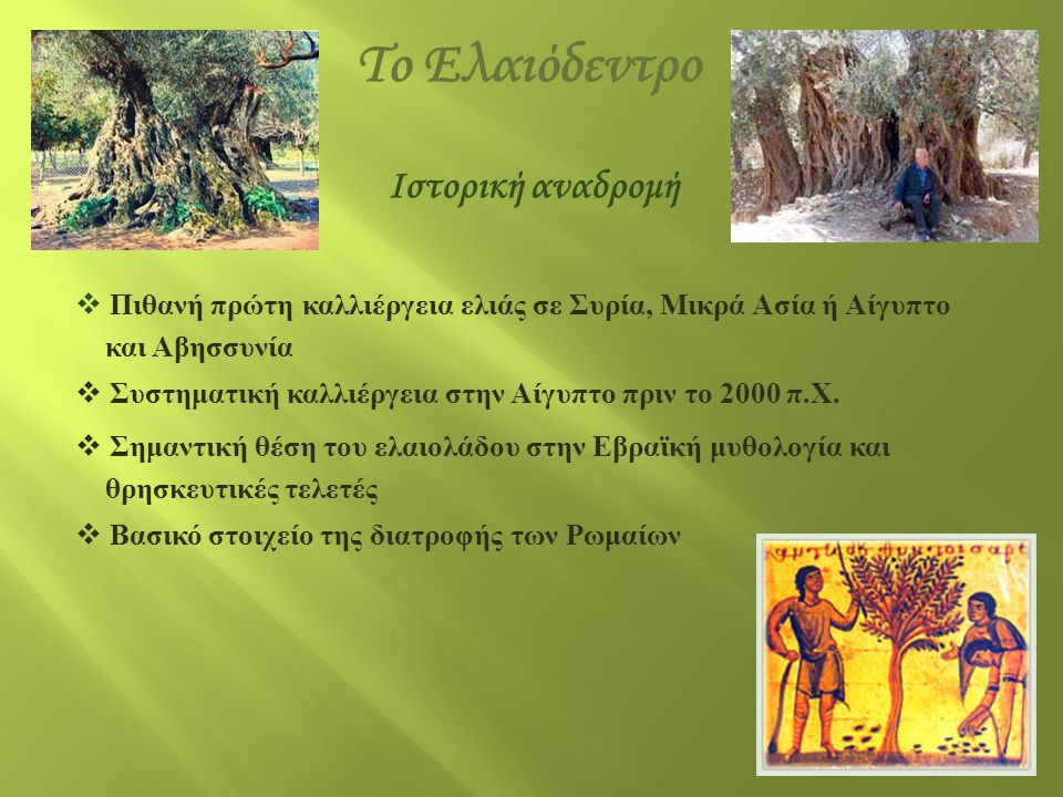 Το Ελαιόδεντρο Ιστορική αναδρομή