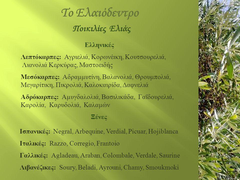 Το Ελαιόδεντρο Ποικιλίες Ελιάς Ελληνικές