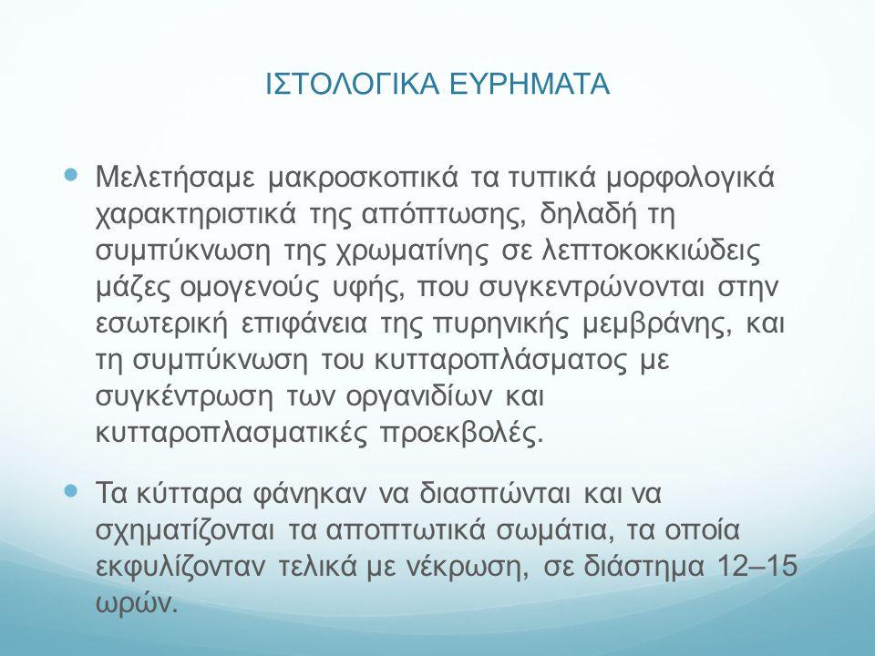 ΙΣΤΟΛΟΓΙΚΑ ΕΥΡΗΜΑΤΑ